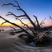 Trees At Driftwood Beach Poster by Debra and Dave Vanderlaan