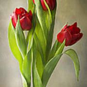 Tulipa Poster by Jacky Parker