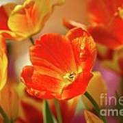 Tulips Poster by Kathleen Struckle