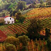 Tuscan Autumn Poster by John Galbo