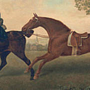 Two Hacks Poster by George Stubbs