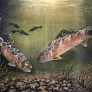Two Rainbow Trout Poster by Donna Tucker