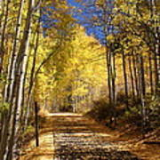 Vail Colorado Fall Bike Path Poster by Michael J Bauer