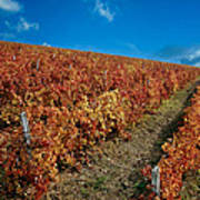 Vineyard In Negotin. Serbia Poster by Juan Carlos Ferro Duque