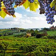 Vineyards In San Gimignano Italy Poster by Susan Schmitz