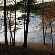 Walden Pond In Autumn Poster by Sheila Savage