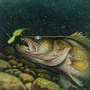 Walleye And Crank Bait Poster by Jon Q Wright