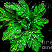 Water Drops Poster by Robert Bales