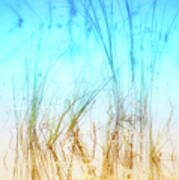 Water Grass - Outer Banks Poster by Dan Carmichael
