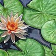Water Lily Poster by David Stribbling