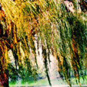 Weeping Willow Tree Painterly Monet Impressionist Dreams Poster by Carol F Austin