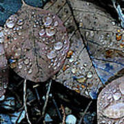 Wet Leaves Poster by Artist and Photographer Laura Wrede