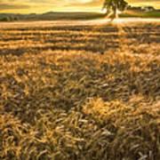 Wheat Fields Of Switzerland Poster by Debra and Dave Vanderlaan