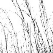 Wild Grasses Abstract Poster by Natalie Kinnear