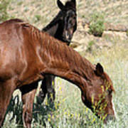 Wild Horse Mama And Her Baby Poster by Sabrina L Ryan