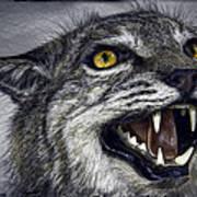 Wildcat Ferocity Poster by Daniel Hagerman