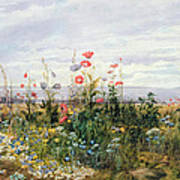 Wildflowers With A View Of Dublin Dunleary Poster by A Nicholl