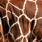 Wildlife Patterns  Poster by Aidan Moran