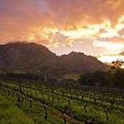 Wineland Sunrise Poster by Aaron S Bedell