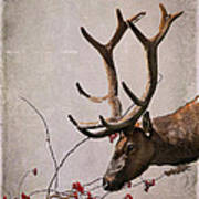 Winter King Poster by Julie Magers Soulen