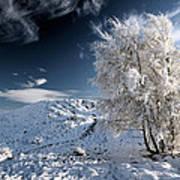 Winter Landscape Poster by Grant Glendinning