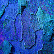 Winter London Plane Tree Abstract 4 Poster by Margaret Saheed