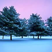Winter Trees Poster by Brian Jannsen