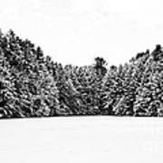 Winter Trees Mink Brook Hanover Nh Poster by Edward Fielding