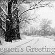 Winter White Season's Greeting Card Poster by Carol Groenen