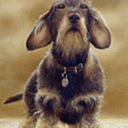 Wire Haired Dachshund Poster by John Silver
