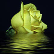 Yellow Rose II Poster by Sandy Keeton