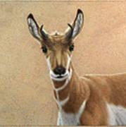 Young Pronghorn Poster by James W Johnson