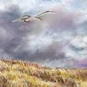 Seagull Flying Over Dunes Poster by Jack Skinner