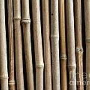 Bamboo Fence Poster by Yali Shi