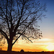 Bare Tree At Sunset Poster by Skip Nall