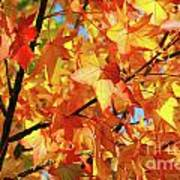 Fall Colors Poster by Carlos Caetano