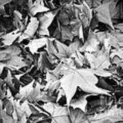 Fallen Leaves Poster by Fabrizio Troiani