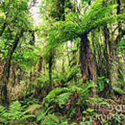 Fern Tree Poster by MotHaiBaPhoto Prints