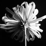 Flower Poster by Sumit Mehndiratta