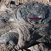 Fossilised Stromatolites Poster by Dirk Wiersma