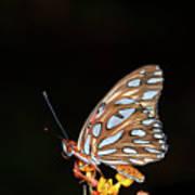 Gulf Fritillary Butterfly Poster by Jim McKinley