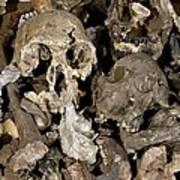 Hominid Skull Casts Poster by Volker Steger