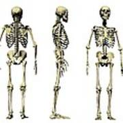 Human Skeleton Anatomy, Artwork Poster by Victor Habbick Visions