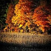 Indiana Autumn Poster by Michael L Kimble