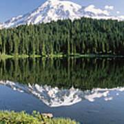 Mt Rainier Reflected In Lake Mt Rainier Poster by Tim Fitzharris
