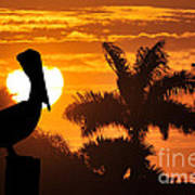 Pelican At Sunset Poster by Dan Friend