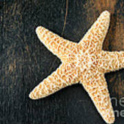 Starfish Poster by Darren Fisher