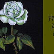 White Rose Invitation Card Poster by Joyce Geleynse