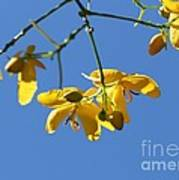 Yellow And Blue Poster by Theresa Willingham