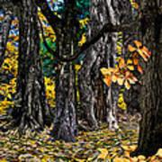 Autumn Landscape Poster by Vladimir Kholostykh